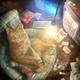 Аватар пользователя CatGeeks