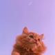 Аватар пользователя Raossa
