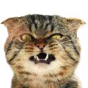 """Аватар сообщества """"Коты правят миром"""""""