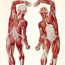 """Аватар сообщества """"Прикладная анатомия"""""""