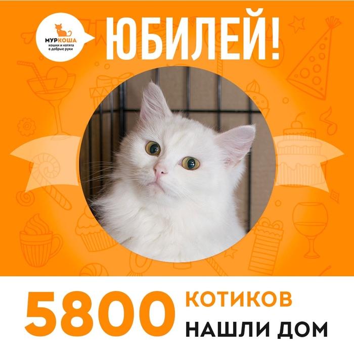Празднуем очередной юбилей уже 5800 котиков нашли дом!