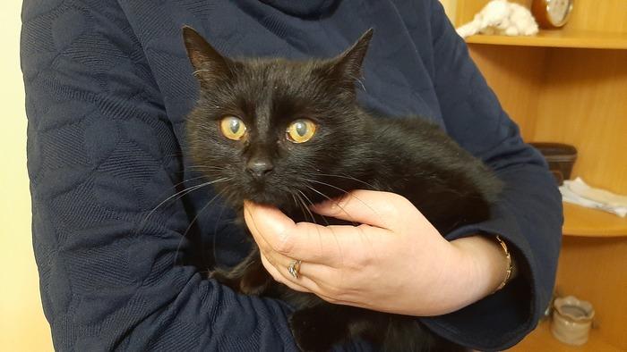 Красивая черная кошечка ищет дом, Луганская область