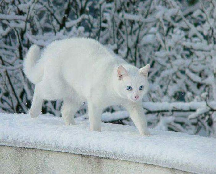 Пока февраль, как господин, накинул белое пальто...