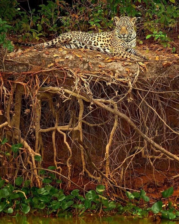 Котик в засаде иди просто отдыхает?