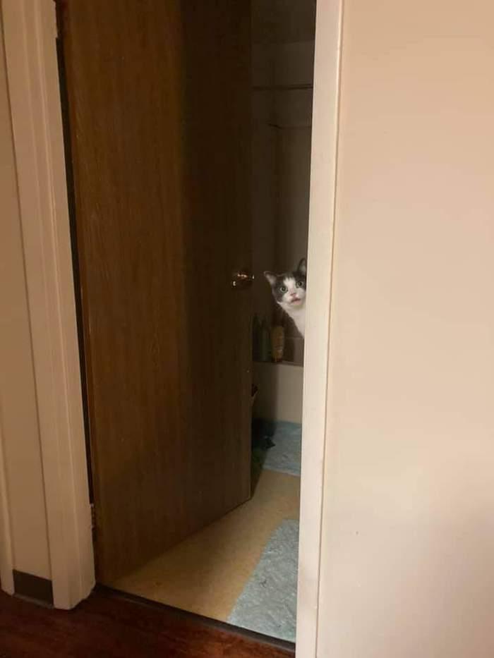 Я тебя не звал. Уходи