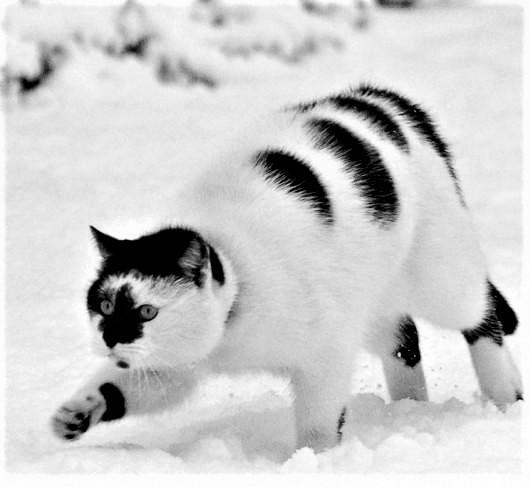 Штрих - Кот