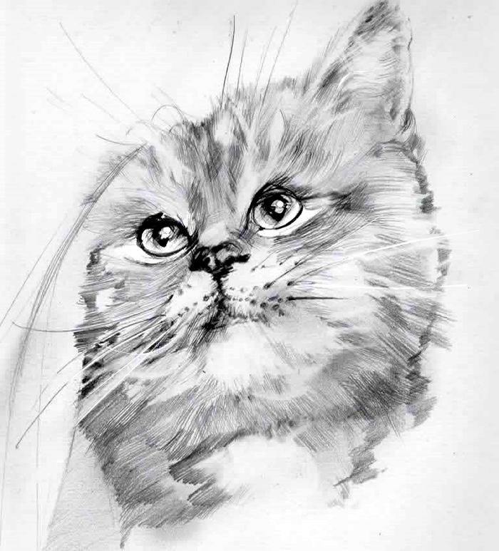 Кот, карандашный рисунок