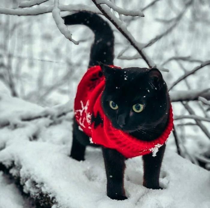 Черный котэ на белом снегу