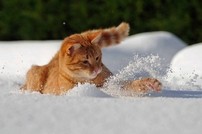Снежный спринт...