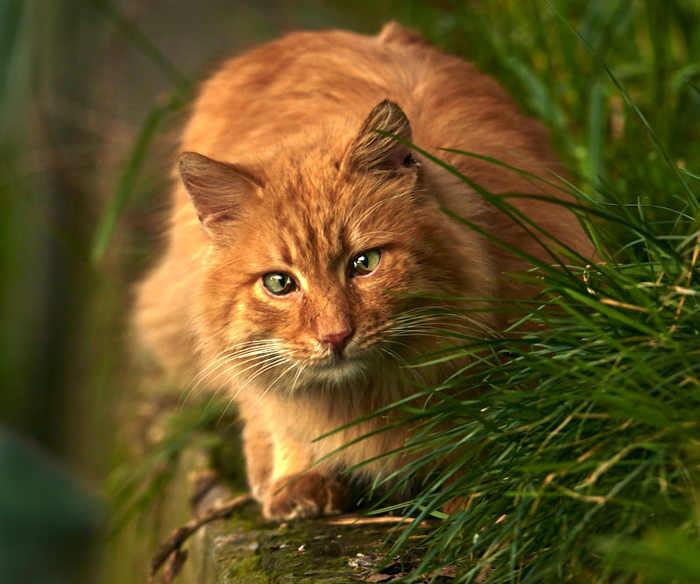 Зачем коту зелёные глаза? А, вот не знаешь! Это чтобы в траве замаскироваться!