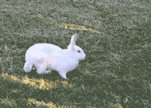 Сейчас покажу как надо Заяц, Кролик, Гифка, Животные
