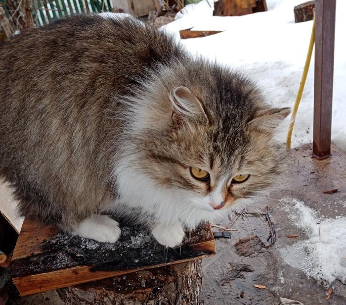 Опять дачный котик