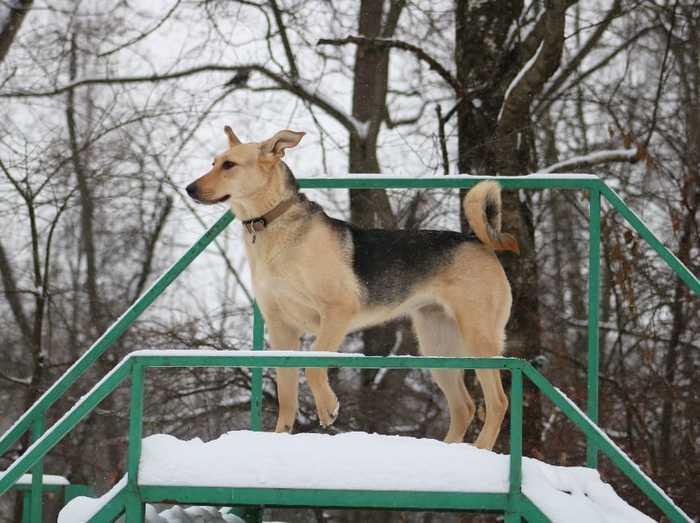 Москва. Без рейтинга. Поможем пристроить собаку Без рейтинга, Собака, В добрые руки, Домашние животные, Длиннопост, Москва