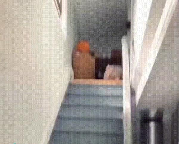 Любовь к хозяину и страшная лестница