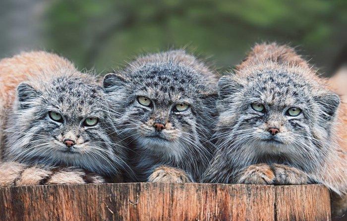 Трое из ларца)
