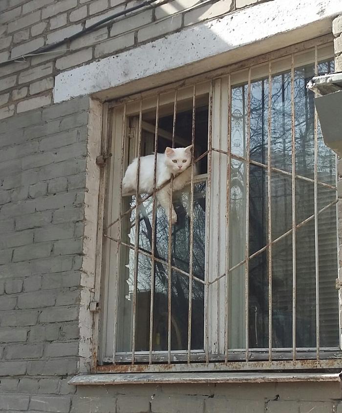 Котик вышел погулять