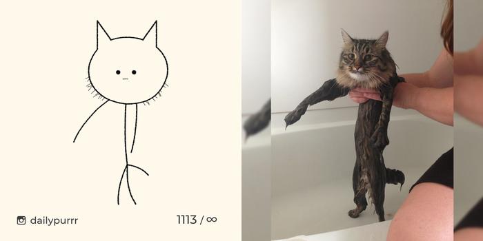 Когда кот состоит только на 25 из кота, всё остальное, мех