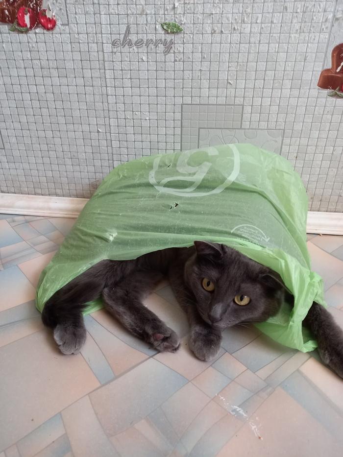 Утро кота