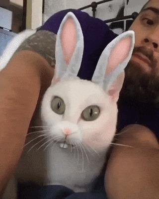Кот не оценил шутки