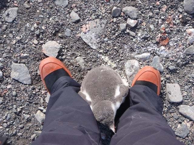 Когда сталмамой в Антарктиде