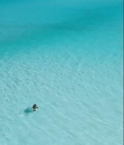 Серфинг морского льва