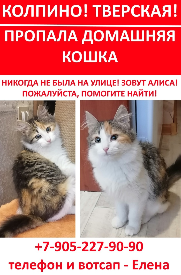 Прошу помогите найти котёнка!