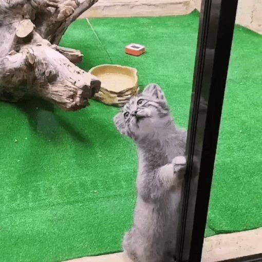 Ну поиграйте, наконец, кто нибудь с пушистым котиком...