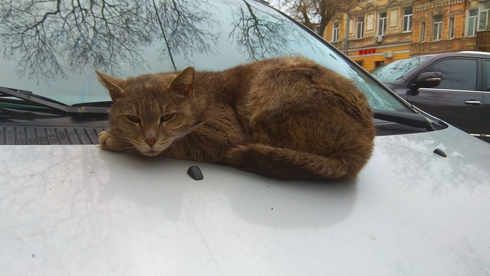 """""""Одесские коты"""""""