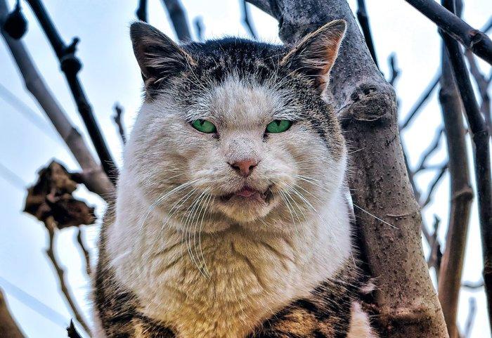 Моя война с котом Кот, Детство, Истории из жизни, Coub, Длиннопост