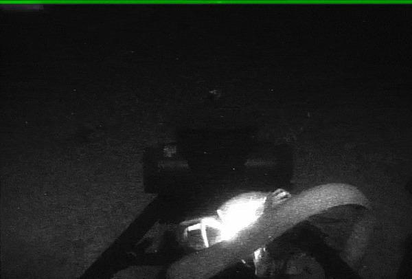 Биологи получили редкие кадры гигантских глубоководных кальмаров Наука, Биология, Кальмар, Факты, Исследования, Гифка, Длиннопост