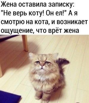 Голодный (нет) кот
