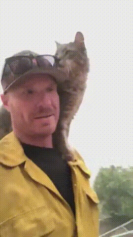 Очень дружелюбный кот благодарит пожарного после спасения от лесного пожара