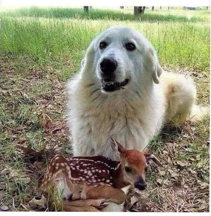 Настоящий друг  не матрас, но положиться на него можно