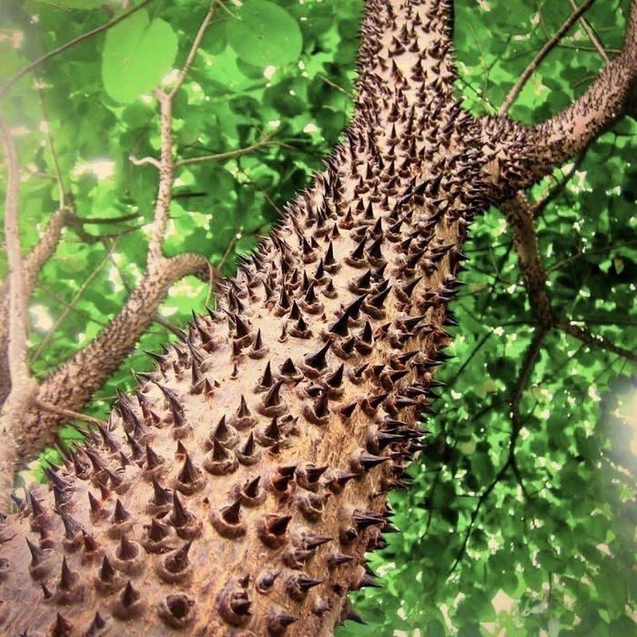 Самые опасные растения мира, от которых лучше держаться подальше Растения, Интересное, Топ, Видео, YouTube, Ядовитые растения, Факты, Длиннопост