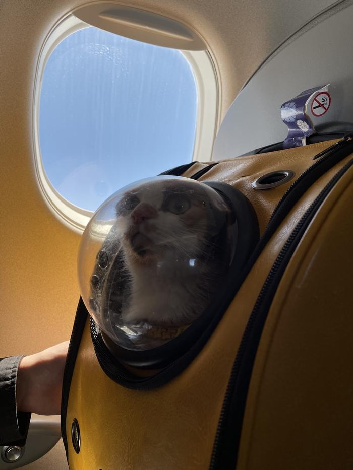 Первый полет и почти в космос) Хроники котонавта