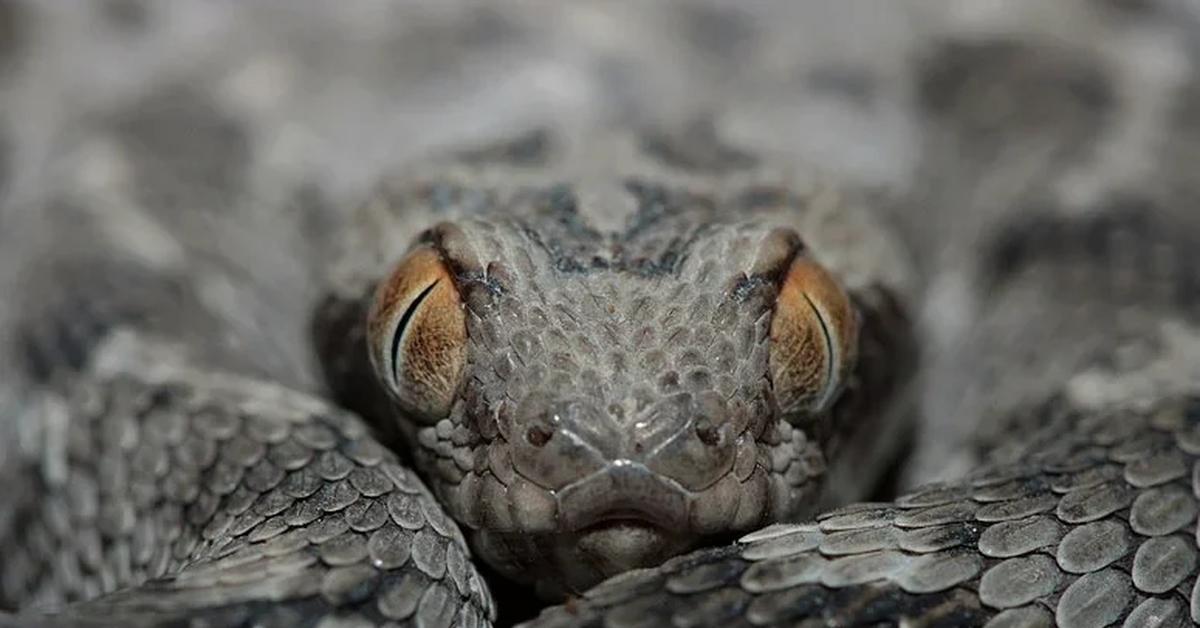 Офигела от размера черного змея