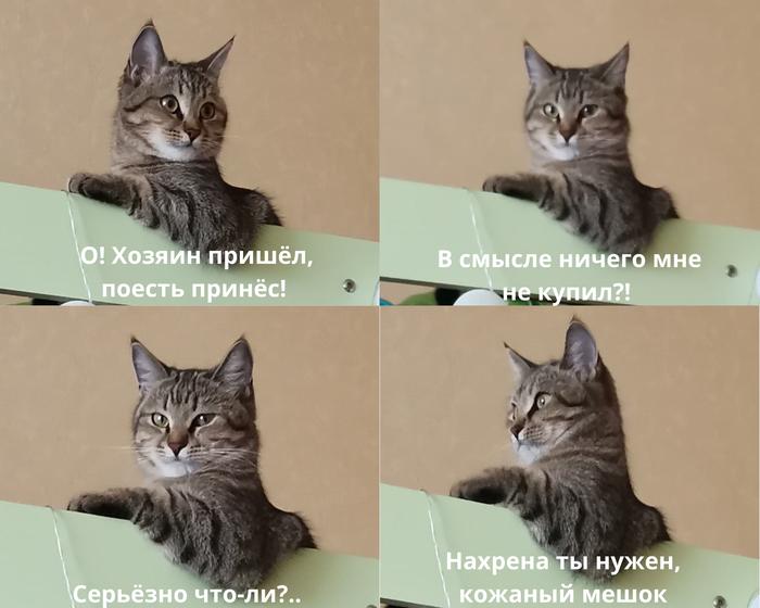 Оказывается, и у меня типичная кошка...