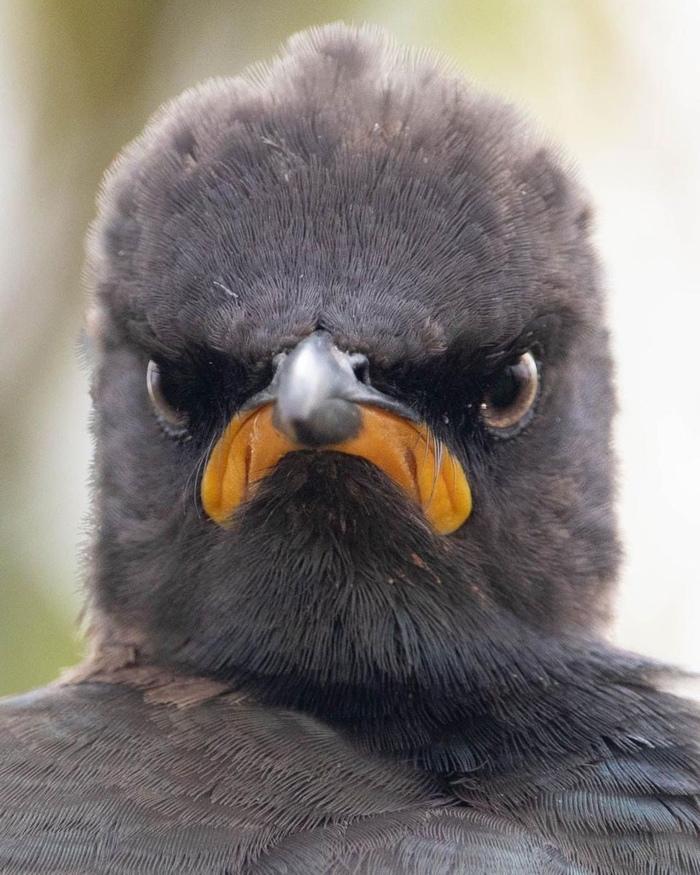 Серьёзный птиц