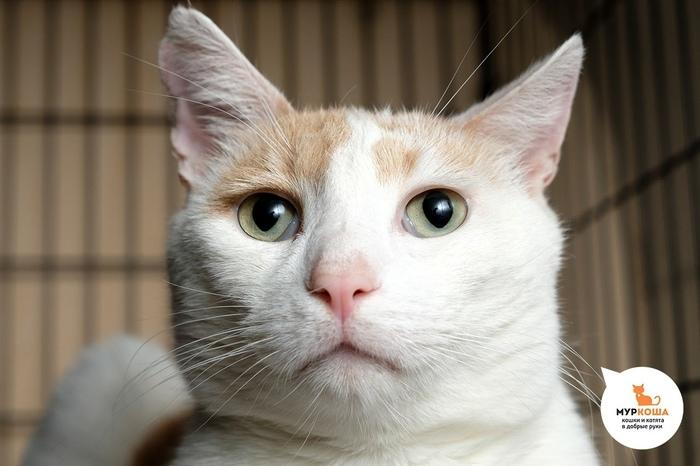 Ищем дом котику по кмличке Прованс