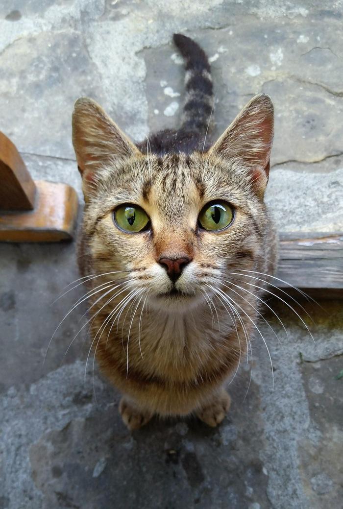 Просто уличный кот
