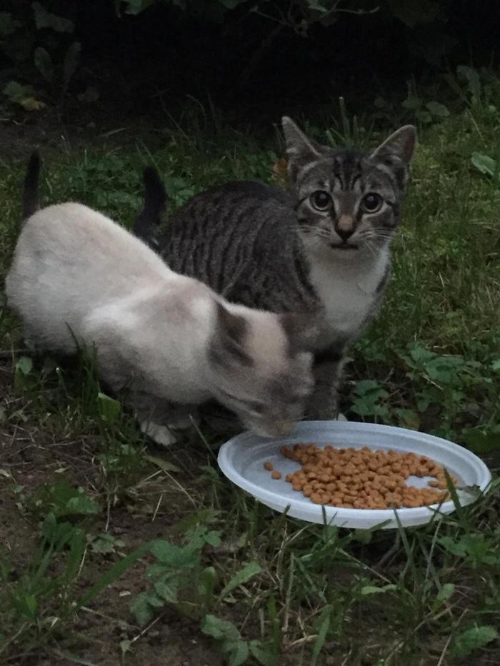 Котятам очень нужен дом. Они могут оказаться в заколоченном подвале или их отравят. Санкт-Петербург, Невский район