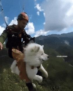 Пестрая подборка gif'ок с собаками Гифка, Собака, Животные, Длиннопост